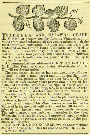 As shown at the end of this ad—published the same year as the Gardener's Monthly article—Apple-Qunice was another fruit grown on Croton Point.