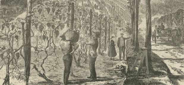 "Detail from ""Gathering Grapes—An October Scene on the Hudson,"" a wood engraving published in Harper's Weekly. The image depicts the Underhill vineyard in 1867."